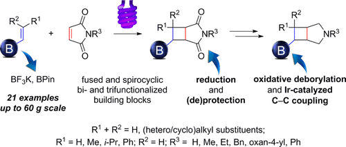 Photochemical [2 + 2] cycloaddition of alkenyl boronic derivatives: an entry into 3-azabicyclo[3.2.0]heptane scaffold