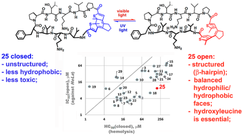 Structure-Activity Relationships of Photoswitchable Diarylethene-Based β-Hairpin Peptides