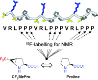 Synthesis of Trifluoromethyl-Substituted Proline Analogues as 19F NMR Labels for Peptides in the Polyproline II Conformation