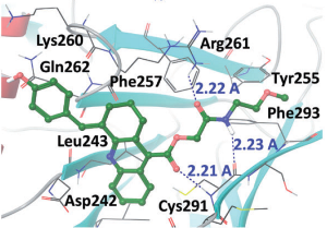 1E7-03, a low MW compound targeting host protein phosphatase-1, inhibits HIV-1 transcription