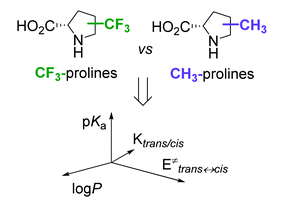 Comparative effects of trifluoromethyl- and methyl-group