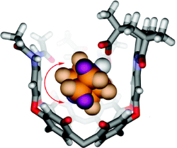 Interaction Energies and Dynamics of Acid−Base Pairs Isolated in Cavitands
