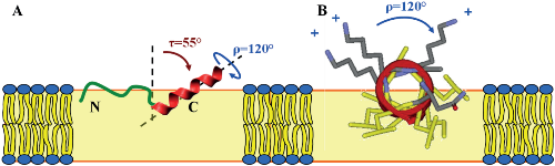 Structure Analysis and Conformational Transitions of the Cell Penetrating Peptide Transportan 10 in the Membrane-Bound State