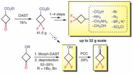 Multigram Synthesis of C4/C5 3,3-Difluorocyclobutyl-Substituted Building Blocks